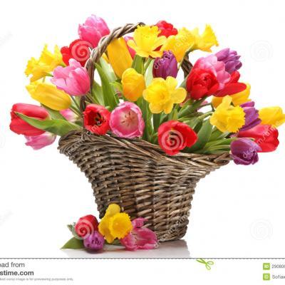 Tulipes et jonquilles dans le panier 29080693